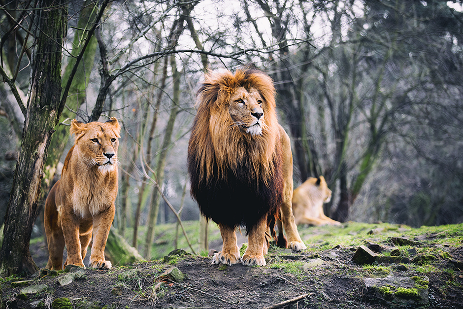 Царско семейство